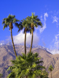 Palm Trees with San Jacinto Peak in Background, Palm Springs, California, USA Photographic Print by DeFreitas Michael