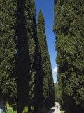 Road to Castello Di Romena, Casentino, Arezzo, Tuscany, Italy, Europe Photographic Print by Tondini Nico