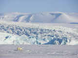 Polar Bear in Front of the Glacier, Billefjord, Svalbard, Spitzbergen, Arctic, Norway,Scandinavia Photographic Print by Milse Thorsten