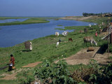 Latrines on the River Bank in Rough Land Grazed by Cows in a Slum in Dhaka, Bangladesh Photographic Print by Taylor Liba