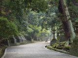 Path to Kasuga-Taisha Shrine, Nara, Kansai, Honshu, Japan Photographic Print by Schlenker Jochen