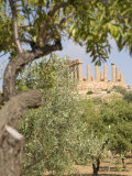 Olive and Almond Trees and the Temple of Juno, Valley of the Temples, Agrigento, Sicily, Italy Photographic Print by Olivieri Oliviero