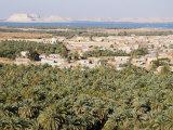 Birket Siwa, Siwa Oasis, Western Desert, Egypt, North Africa, Africa Photographic Print by Schlenker Jochen