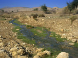 Water Stream Running Through Judean Desert, Israel, Middle East Photographic Print by Simanor Eitan