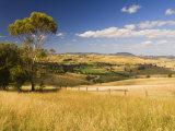 Farmland, Buchan, Victoria, Australia, Pacific Photographic Print by Schlenker Jochen