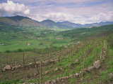 Vineyards Near St. Jean Pied De Port, Basque Area, Aquitaine, France, Europe Photographic Print by Woolfitt Adam