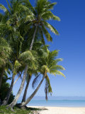 Palm Fringed Beaches, Cook Islands, South Pacific, Pacific Photographic Print by DeFreitas Michael