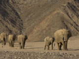 Herd of Desert-Dwelling Elephant, Namibia, Africa Photographic Print by Milse Thorsten