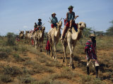 Tourists on Camels, Led by Samburu Tribesman, Samburuland, Kenya, East Africa, Africa Photographic Print by Poole David