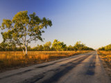 Ghost Gum Tree and Road, Northern Territory, Australia, Pacific Photographic Print by Schlenker Jochen
