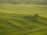 Countryside Near Pienza. Val D'Orcia, Siena Province, Tuscany, Italy, Europe Photographic Print by Pitamitz Sergio