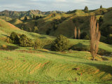 Mudstone Hill Farmland, King Country, North Island, New Zealand, Pacific Photographic Print by Schlenker Jochen