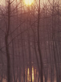 Bare Trees Silhouetted by Winter Sunset, and Reflected in Pond Photographic Print by Woolfitt Adam