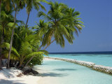 Palm Trees on a Tropical Beach in the Maldive Islands, Indian Ocean Photographic Print by Scholey Peter