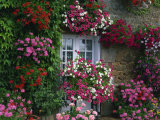 Farmhouse Window Surrounded by Flowers, Ille-et-Vilaine, Brittany, France, Europe Photographic Print by Tomlinson Ruth