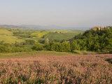 Countryside Near Pienza, Val D'Orcia, Siena Province, Tuscany, Italy, Europe Photographic Print by Pitamitz Sergio