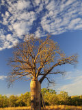 Boab Tree, Kimberley, Western Australia, Australia, Pacific Photographie par Schlenker Jochen