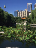 Lake in the Chinese Garden at Darling Harbour, Sydney, New South Wales, Australia Photographic Print by Richardson Rolf