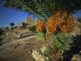 Byblos, Lebanon, Middle East Photographic Print by Olivieri Oliviero