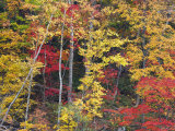 Forest in Autumn, Daisetsuzan National Park, Hokkaido, Japan Photographic Print by Schlenker Jochen