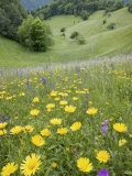 Wildflowers in Traditionally Managed Hay Meadow, Ljubljanska Kotlina, Slovenia, Europe Photographic Print by Edwardes Guy
