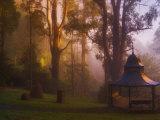 Alfred Nicholas Gardens, Dandenong Ranges, Victoria, Australia, Pacific Photographic Print by Schlenker Jochen