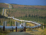 Trans Alaska Oil Pipeline, Alaska, USA Photographic Print by Waltham Tony