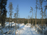Forests of Pinega National Park in Winter, Arkhangelsk, Russia, Europe Photographic Print by Waltham Tony