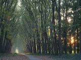 Avenue of Trees with Sun Low in the Sky Behind, at Versailles, Ile De France, France, Europe Photographic Print by Woolfitt Adam
