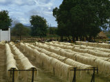 Sisal Rope Factory, Taveta, Kenya, East Africa, Africa Photographic Print by Theakston Victoria
