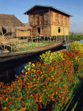House on Stilts, with Marigolds, Inle Lake, Myanmar Photographic Print by Strachan James