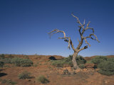 Kings Canyon, Watarrka National Park, Northern Territory, Australia Photographic Print by Wilson Ken