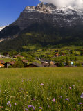 Spring Alpine Flower Meadow and Chalets, Grindelwald, Bern, Switzerland, Europe Photographic Print by Richardson Peter