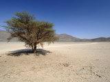 Nubian Desert, Sudan, Africa Photographic Print by Groenendijk Peter