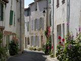 Hollyhocks Lining a Street, La Flotte, Ile De Re, Charente-Maritime, France, Europe Photographic Print by Richardson Peter