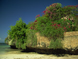 Bougainvillea Along Wall Next to Sea, Malindi, Kenya, East Africa, Africa Photographic Print by Strachan James