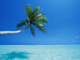 Palm Tree Overhanging the Sea, Male Atoll, Maldives, Indian Ocean Photographic Print by Papadopoulos Sakis
