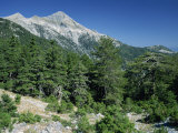 Trees on the Slopes of Mount Taigetos, 2407M, Above Sparta, Peloponnese, Greece, Europe Photographic Print by Wilson Loraine