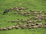 Shepherd on Horseback with Flock of Sheep, Post Dzhety-Oguz Near Kara-Kol, Kyrgyzstan, Central Asia Photographic Print by Strachan James