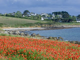Field of Poppies, Saint Sanson En Plouganou, North Finistere, Brittany, France, Europe Photographic Print by De Mann Jean-Pierre