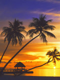 Palm Trees and Ocean at Sunset, Maldives, Indian Ocean Photographic Print by Papadopoulos Sakis