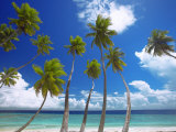 Empty Beach and Palm Trees, Maldives, Indian Ocean Photographic Print by Papadopoulos Sakis