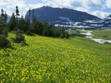 Meadow of Glacier Lilies, with the High Rocky Mountains Behind, Glacier National Park, Montana, USA Photographic Print by Waltham Tony
