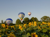 Hot Air Ballooning over Fields of Sunflowers in the Early Morning, Charente, France, Europe Photographic Print by Groenendijk Peter