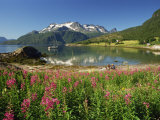 Willowherb Beside Lake and Boat at Anchor, Lofoten Islands, Norway, Scandinavia, Europe Photographic Print by Groenendijk Peter