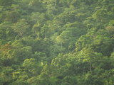 Rainforest Canopy of the Cockscomb Basin Sanctuary, Belize, Central America Photographie par Strachan James