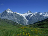Wetterhorn and Schreckhorn Viewed from First in the Bernese Oberland, Switzerland, Europe Photographic Print by Merten Hans Peter