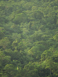 Rainforest Canopy of the Cockscomb Basin Sanctuary, Belize, Central America Photographic Print by Strachan James