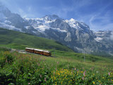 Wild Flowers on the Slopes Beside the Jungfrau Railway with the Jungfrau Beyond, Switzerland Photographic Print by Merten Hans Peter