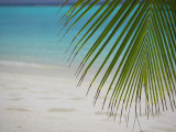 Palm Tree Leaf and Tropical Beach, Maldives, Indian Ocean Photographic Print by Papadopoulos Sakis